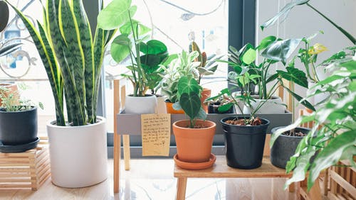 create a beautiful garden in home
