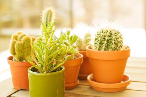 create a beautiful garden