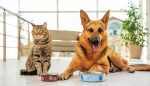 Myths clarified about Grain-Free Food for Dogs and Cats