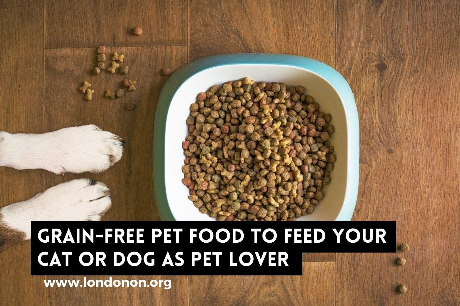 Whether or not to Feed your Dog Grain-Free Pet Food as a Caring London Pet Lover?
